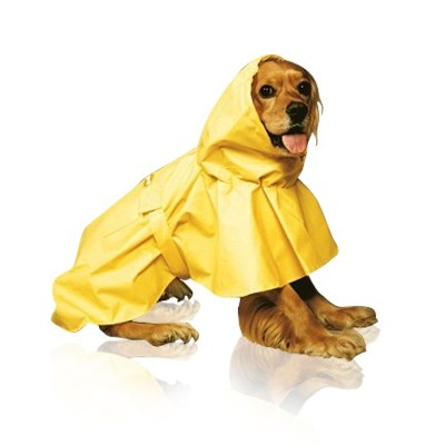 Cocker Spaniel in a yellow rain jacket
