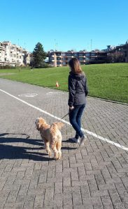 Dog walking with good loose leash behaviour