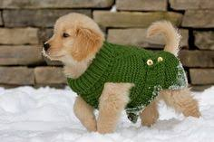 Dog wearing canine clothing out in the snow