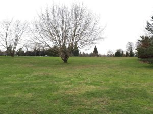 Queen Elizabeth Dog Park Vancouver view from a side street