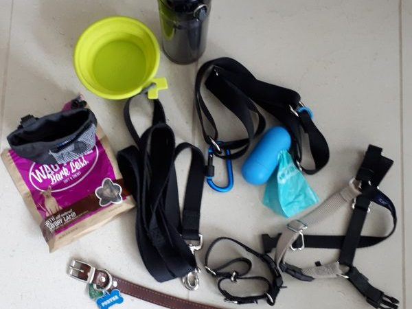 Water bowl, water bottle, treat bag, treats, waist harness, front connection harness, leash, poo bags, martingale collar, classic collar with ID tags