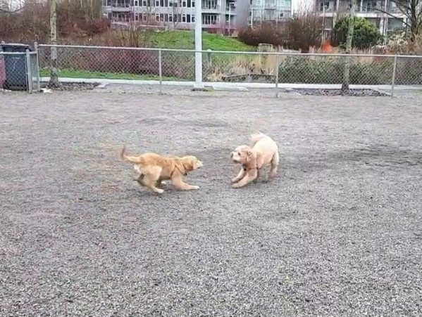 dogs playing in dog park appropriately