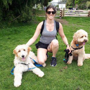 Two doodles and dog walker at park