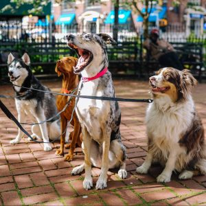 Group of different breeds of dogs sitting together