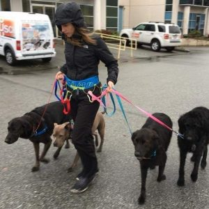 Group of dogs walking with dog walker