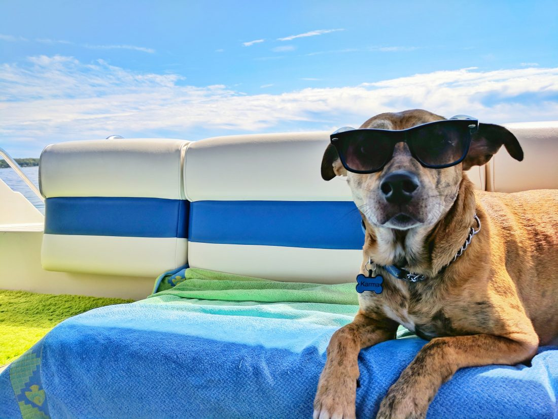 Dog wearing sunglasses laying on a boat