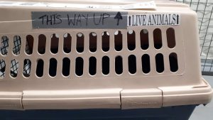 """Dog crate with travel tickers """"This way up"""" and """"live animals"""" on the outside."""