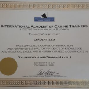 Dog Behaviour and Training Level 1 Certificate through International Academy of Canine Trainers